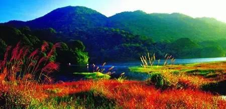 广州野外森林公园分享展示图片