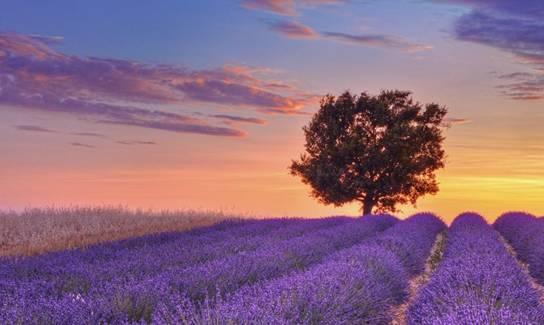 的山谷,迷人的薰衣草,灰色的古堡……普罗旺斯,这是一个多么富有