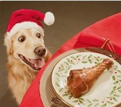 梦见狗狗偷吃猪肉