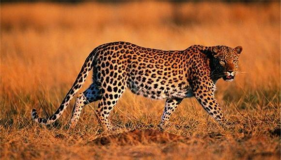 最危险的动物_12个最危险的动物,它们小时候的样子你见过吗 能把你萌翻