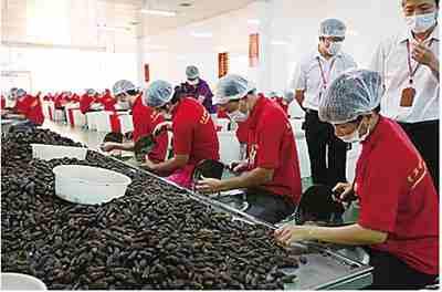 槟榔行业经济总量_槟榔口腔癌图片
