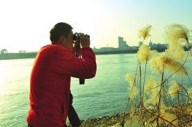 2015年12月17日,一调查队员正在桃源水电站下游清点中华秋沙鸭的数量。