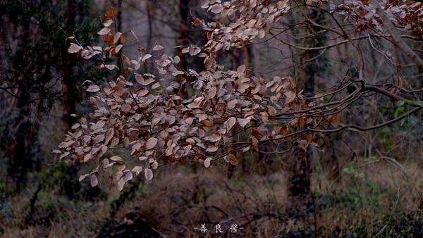 大蜀山 我在小树林里等你,约吗