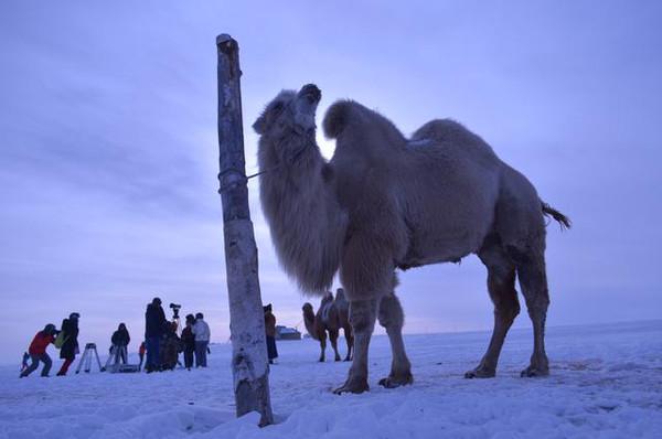 内蒙古冰雪天路上的动物精灵们