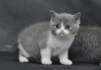 两个月猫咪拉肚子带血图片
