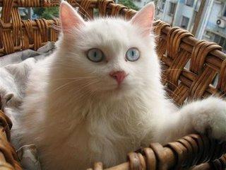 猫咪拉肚子有血图片
