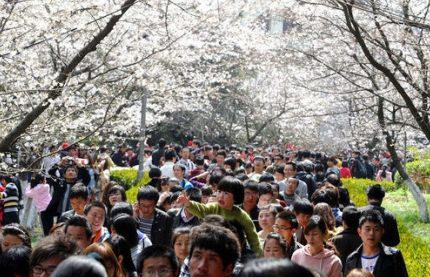 每年的武大樱花节现场都是游人如织摩肩接踵热闹非凡