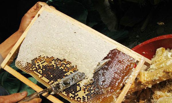 秦岭野生蜂蜜多少钱一斤,野生蜂蜜真假图片
