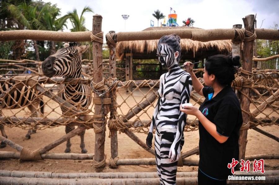 斑马,豹子,长颈鹿,孔雀,鹦鹉,火烈鸟等动物,并与动物园的野生动物一起