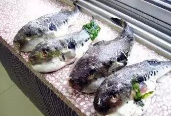 三亚会议公司-三亚人,这些鱼叫什么名字?