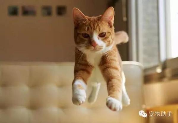 [如何养猫须知]新手养猫须知都在这了 新手开始养猫要注意些什么?