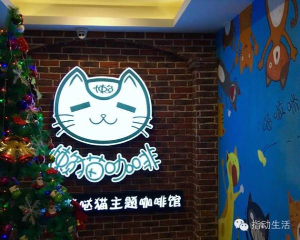 濟南貓主題咖啡_天津時代奧城jiudian_天津市奧城貓主題咖啡廳