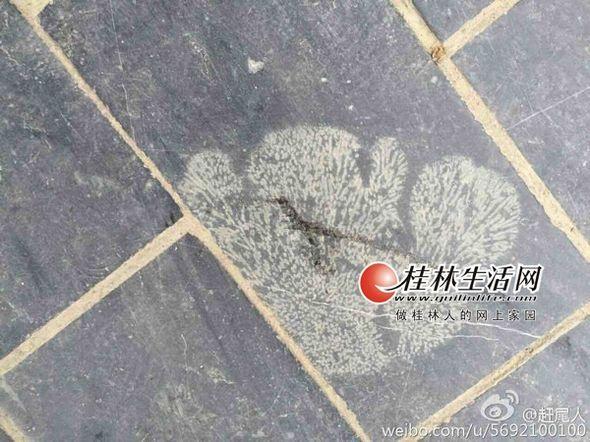 """西山公园附近的各式化石地砖。(图片均由网友""""赶尾人""""提供)"""