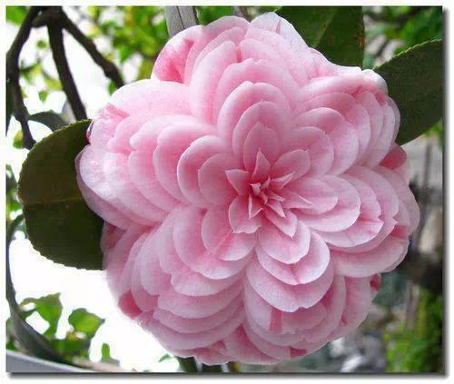 最漂亮的花_世界上最美的花排名