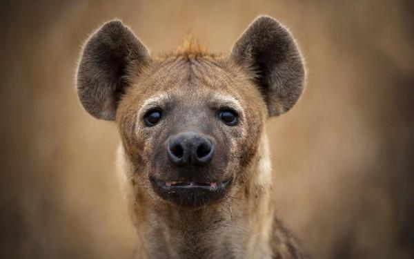 [视频] 盘点2015年动物世界的千姿百态(文稿)