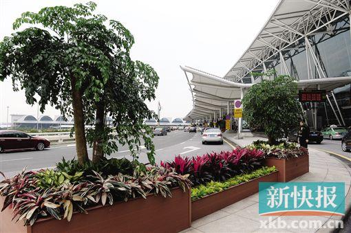 白云机场绿化升级。