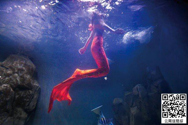 """深海""""美人鱼""""。"""