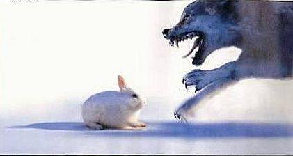 狼遇上小白兔 不怀好意 油价食粮 胡萝卜 成空