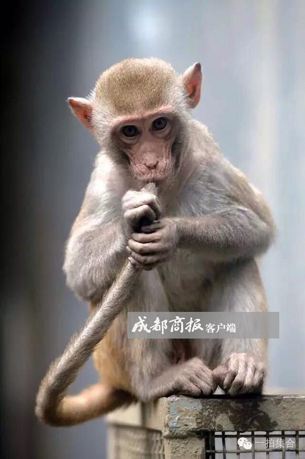谁是你心中的美猴王