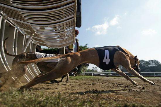 棋盘山动物竞技乐园:http://www.iiqee