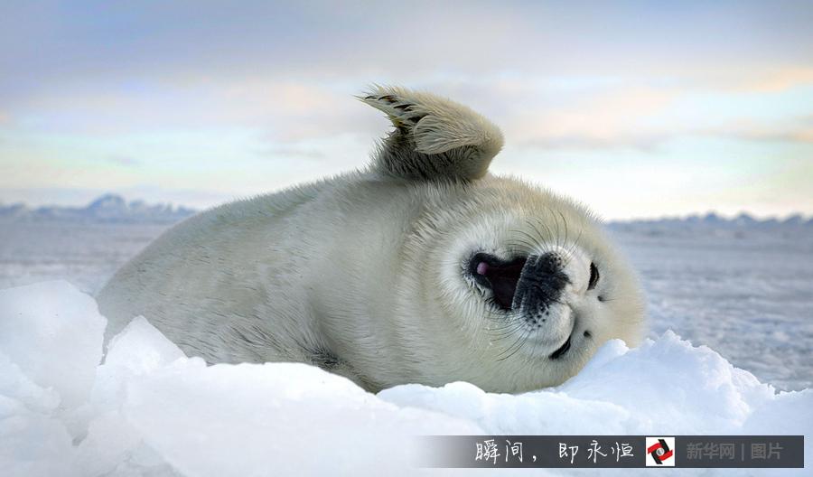 壁纸 动物 海洋动物 桌面 900_528