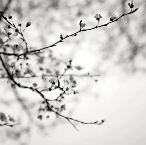 聆听| 冬春的意境--80后设计师的珠宝禅意图片