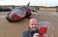 英两鲸搁浅死亡民众与尸自拍