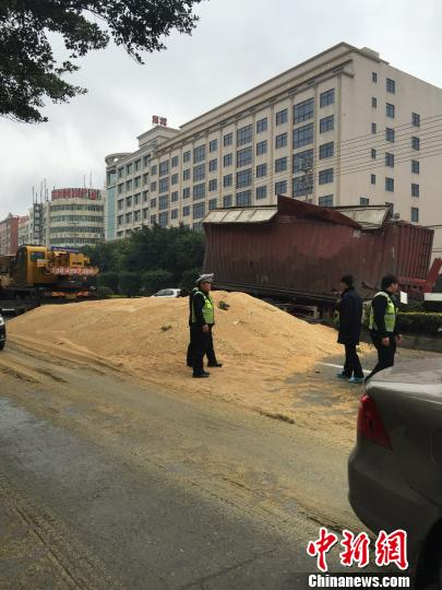 27日,一辆满载小麦的散装箱大货车失控磕碰中距离离花园,所牵引的散装箱侧翻,散装箱所运载的小麦倾泄满路。 供图 摄