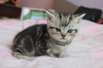 猫咪结肠炎的原因图片