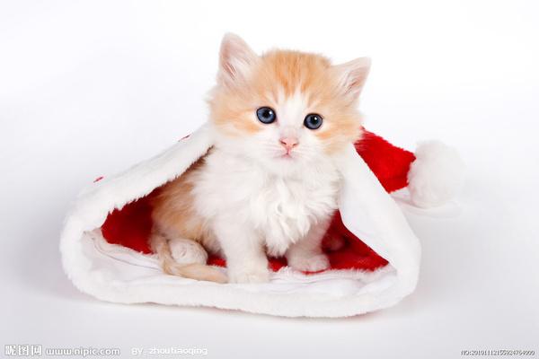 猫咪结肠炎怎么办图片
