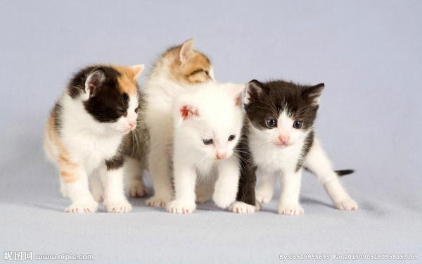 猫咪结肠炎怎么治疗图片