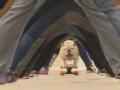 《艾伦秀第13季片花》第89期 艾伦养约克夏豪宅争宠 斗牛犬脚踩滑板胯下飞