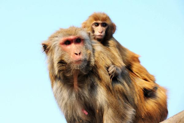 """野生动物保护法修订:""""利用""""条款引争议"""