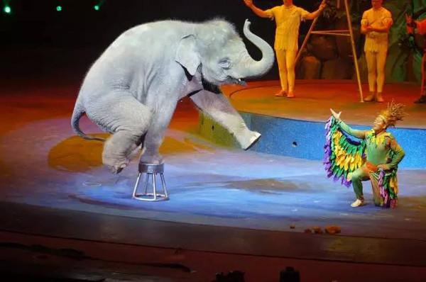 未来在南京灵玲野生动物王国内也将有一个马戏主题文化乐园,内部将会
