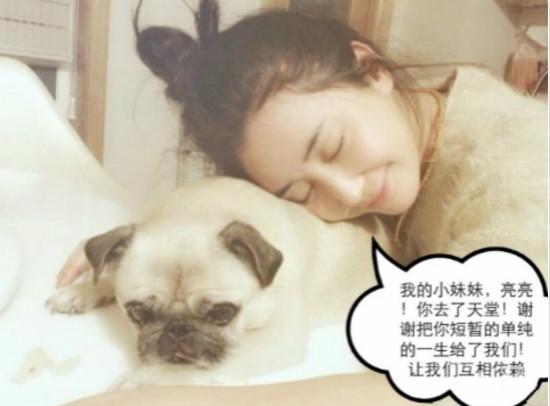 杜若溪与爱犬