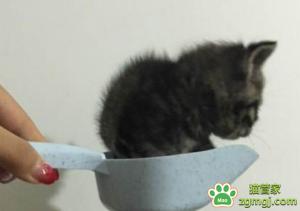 猫咪喜欢自由自在的活动,当它们被紧紧抱住时就很容易感到有压力图片