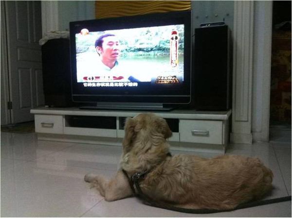 智能电视看电视节目,不用接有线也能看?