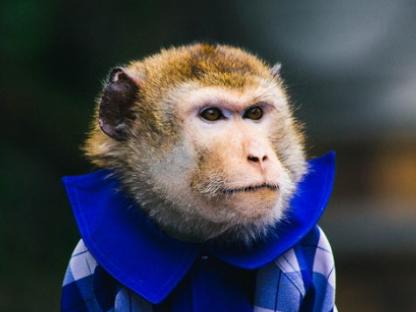 """上海动物园猴年""""猴""""气象"""