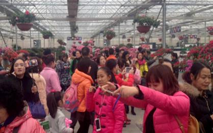 网友评湖南春节旅游去处 大观园香草源凤凰居首