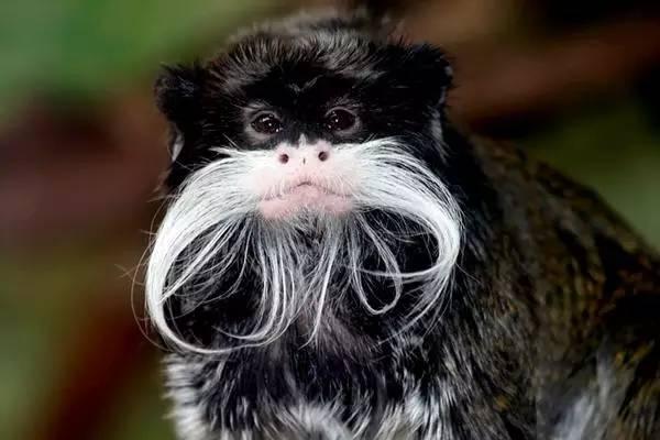 南美洲玻利维亚候_我被这只猴萌到了|猴年说猴