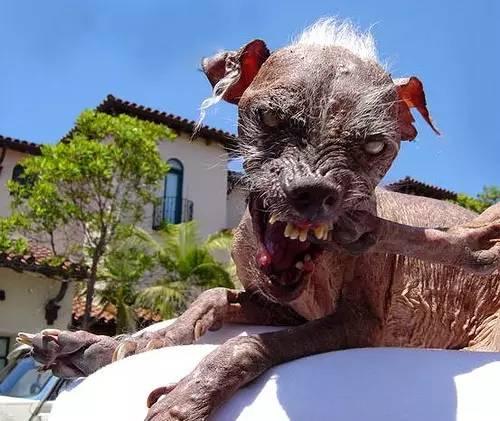 世界上最丑的狗闻闻窝宠物app