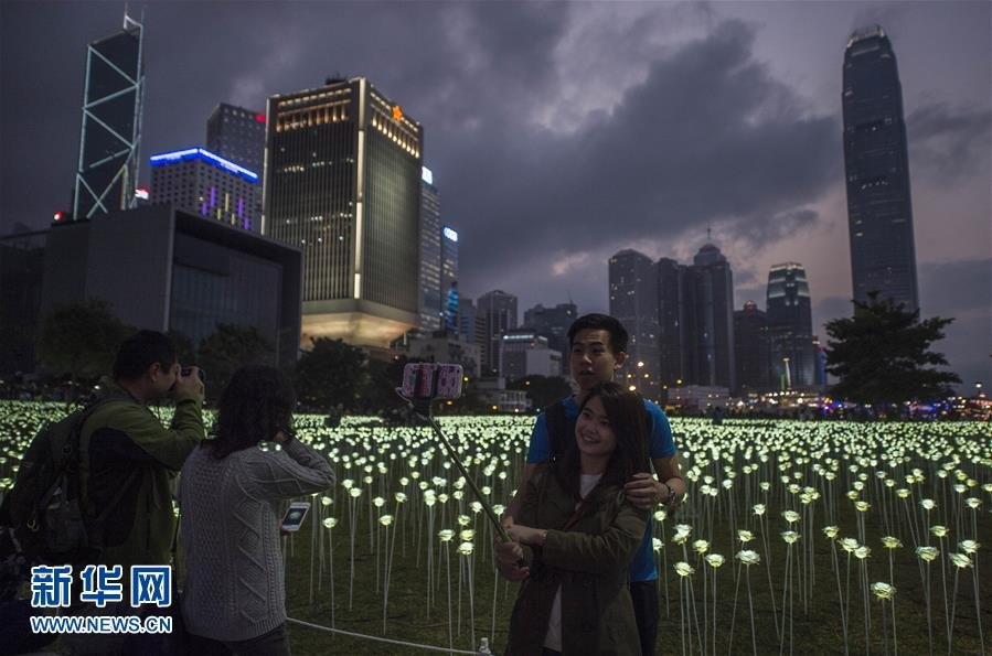 25000朵LED白玫瑰花灯在中环海滨展∩出,在情人节即将到来之际点亮维港,营造出浪漫甜蜜的氛围。新华社记∏者 吕小炜 摄