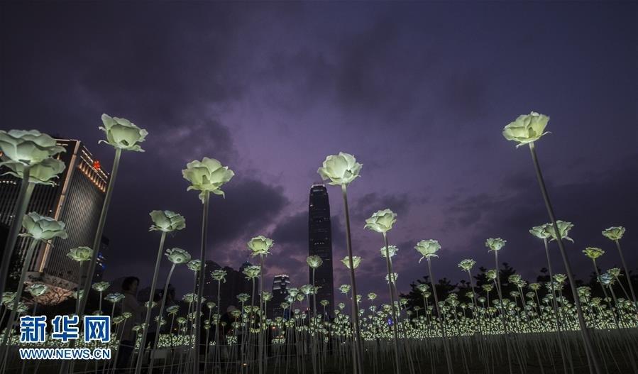 这是在》中环海滨拍摄的白玫瑰花灯(2月13日摄)。 新华社∞记者 吕小炜 摄