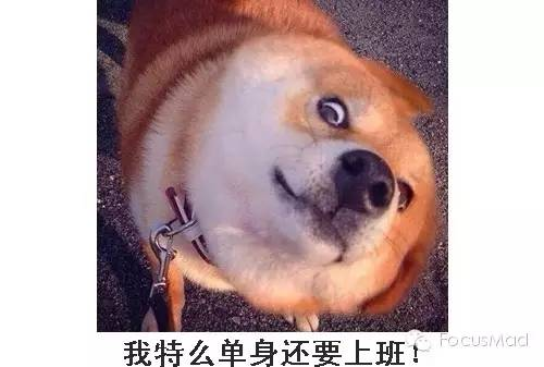 李易峰秀恩爱又何妨?这儿有音乐和狗粮吗傻瓜包表情对应在小胖妹图片