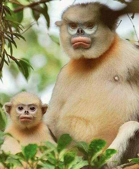 最萌微信动物图片