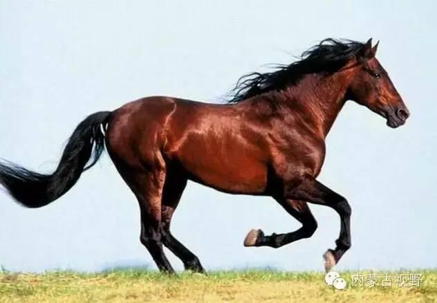马的基本结构图