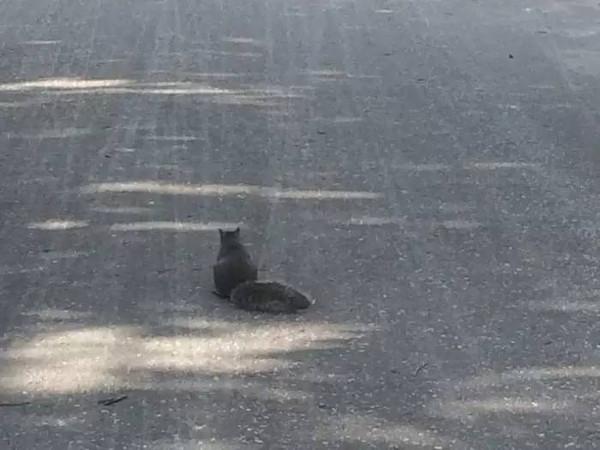 小堡随处可见的小松鼠,我觉得这个寂寞的背影特别喜感图片