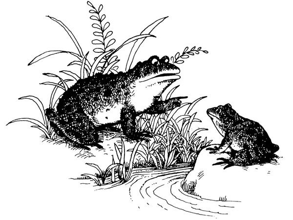 蟾蜍解剖手绘图片