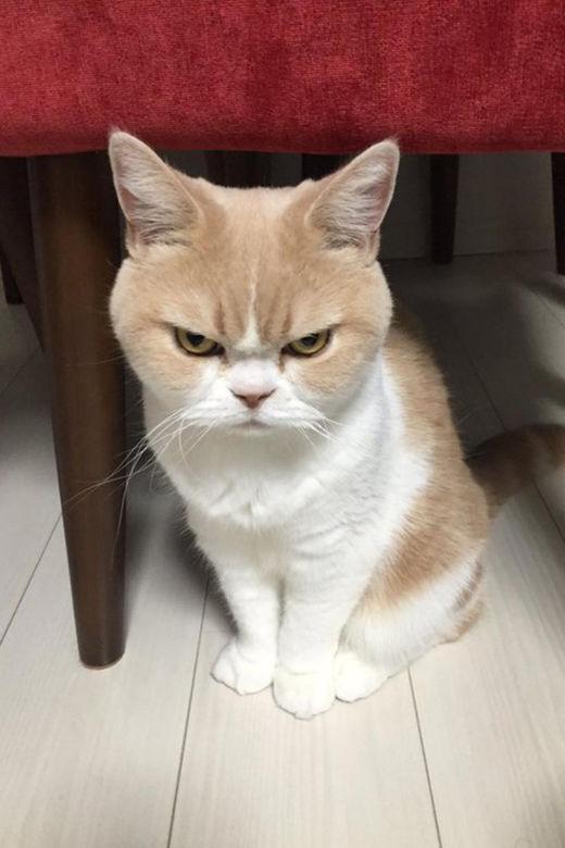 不要再来自了,好?不爽日本的超萌生气猫胡子包扯表情图片