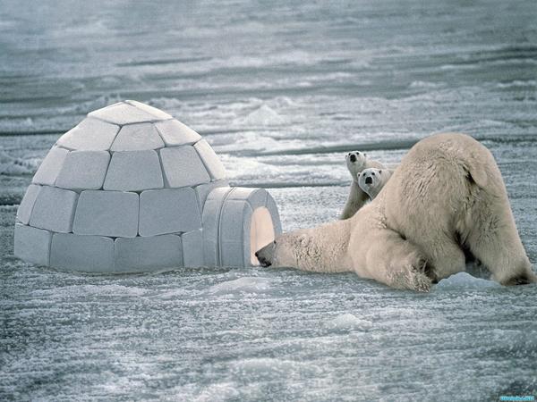 白海军:越冷越向北,去北极圈爱斯基摩人冰屋